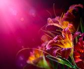 Kwiaty na czerwonym tle. projekt walentynki — Zdjęcie stockowe