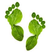 Kunst abstracte voorjaar ecologie symbool groene voetdruk — Stockfoto