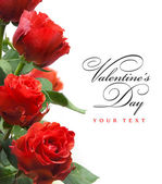 Art greeting card with red roses isolated on white background — Stock Photo