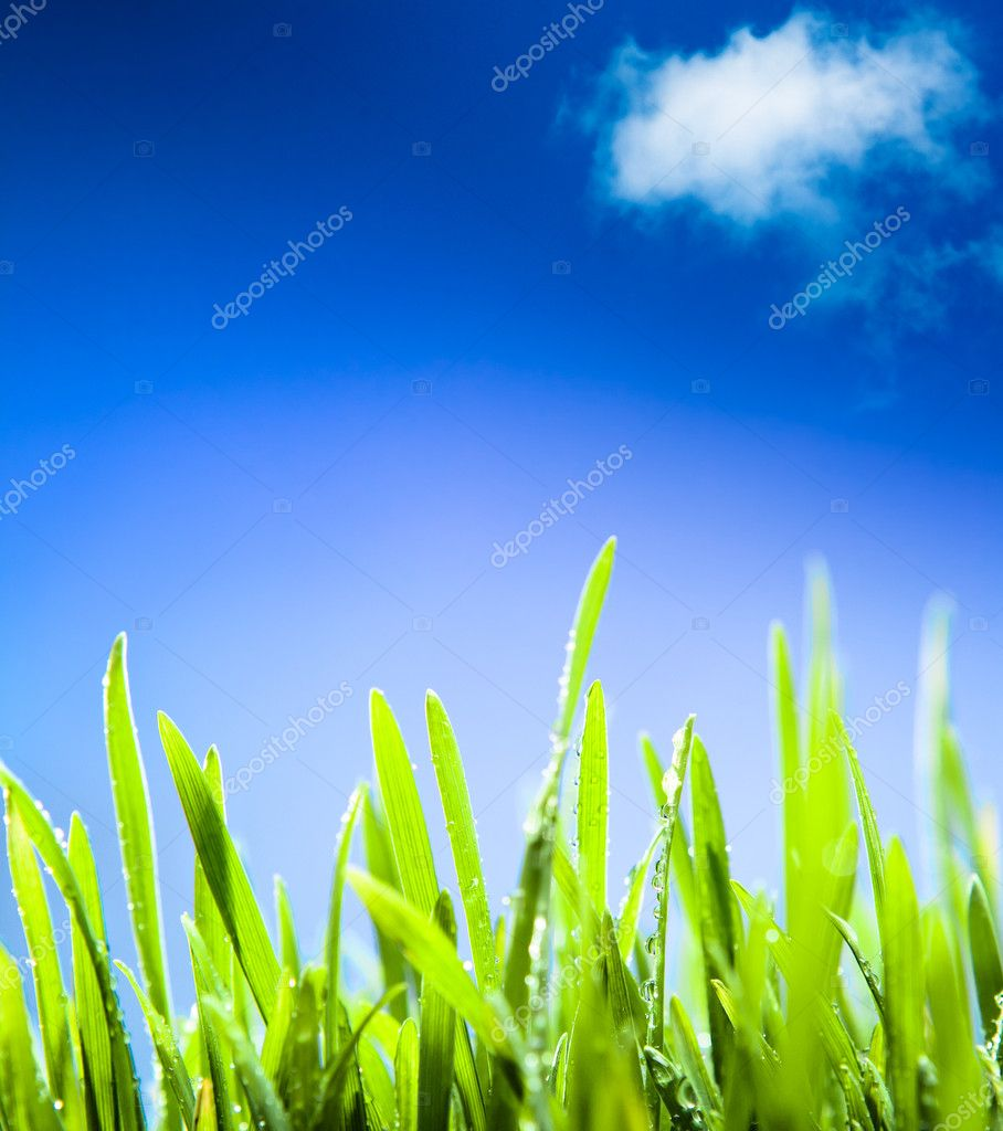 Fresh morning dew on the grass in the spring, a natural spring background — Stock Photo #8903335