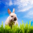 Art Little Easter bunny on green grass — Stock Photo #8924367