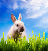 Art Little Easter bunny on green grass — Stock Photo