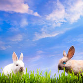 Art couple little Easter rabbits on green grass — Stock Photo