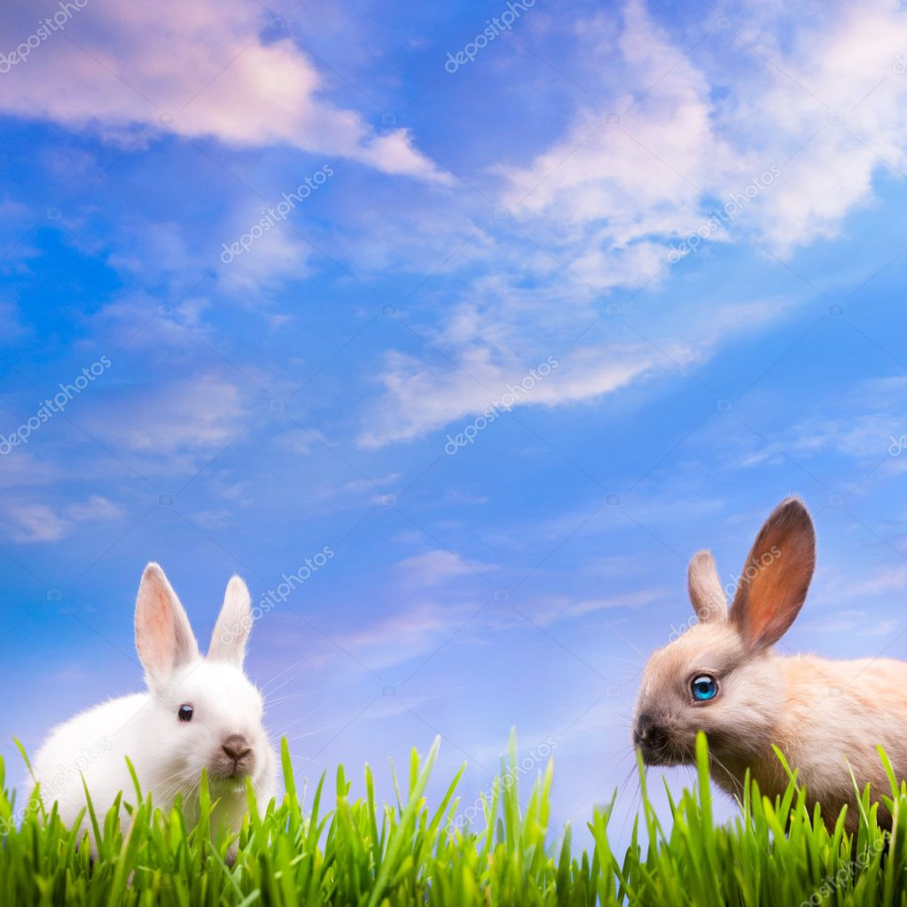 Two little Easter rabbits  on green grass — Stock Photo #8939001