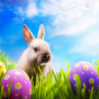 Little Easter bunny and Easter eggs on green grass — стоковое фото #9014126