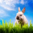 Royalty-Free Stock Photo: Little Easter bunny on green grass