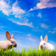 Art couple little Easter rabbits on green grass — Stock Photo #9018406