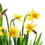 fiori selvatici primavera arte coperto di rugiada alla luce del sole — Foto Stock