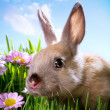Easter Baby rabbit on green grass — Stock Photo