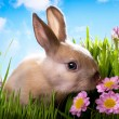 Easter Baby rabbit on green grass with spring flowers — Stock Photo #9245576
