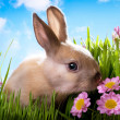 Royalty-Free Stock Photo: Easter Baby rabbit on green grass with spring flowers