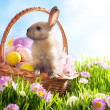 Photo: Easter basket with decorated eggs and the Easter bunny in the gr
