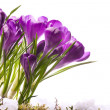 Stock Photo: Art Beautiful Spring Flowers