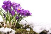 Art Beautiful Spring Flowers — Stock Photo