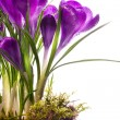 Art Beautiful spring flowers  isolated on white background - Stock Photo