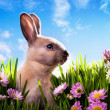 Royalty-Free Stock Photo: Art baby Easter bunny on spring green grass