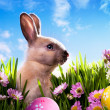 Art baby Easter bunny on spring green grass — Stok fotoğraf