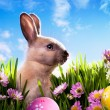 Art baby Easter bunny on spring green grass — Stock Photo #9367403