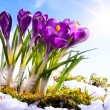 Stock Photo: Art Spring florwer background