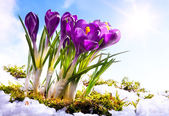 Art Spring florwer background — Stock Photo