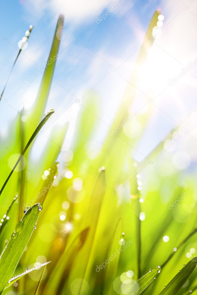 Spring or summer abstract nature background with grass and blue sky  Stock Photo #9370536