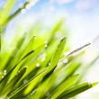 Stock Photo: Spring abstract nature background