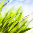 Spring abstract nature background — Stock Photo #9398965