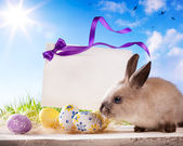 Easter greeting card with the Easter bunny and Easter eggs — Stock Photo