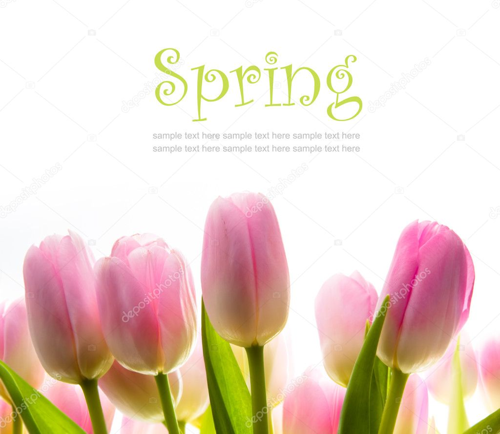 Tulip spring  flowers  in the sunlight — Stock Photo #9618514