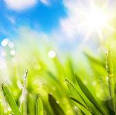 Résumés de fond naturel printemps vert — Photo