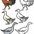 Barnyard Birds — Stock Vector