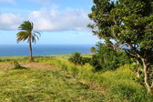 Fields of Saint Kitts — Stock Photo