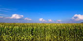 Illinois Agricultural Land — Stock Photo