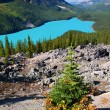 Peyto Lake of Banff National Park — Stock Photo