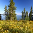 Grand Teton National Park - Wyoming - Stock Photo