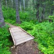 Glacier National Park Hiking Trail — Stock Photo