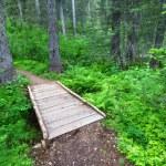 Glacier National Park Hiking Trail — Stock Photo