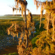 Stock Photo: Spanish Moss in Florida