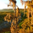 ストック写真: Spanish Moss in Florida