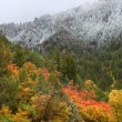 Cache National Forest - Utah — Stockfoto #8027958