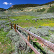 Foto Stock: Bighorn National Forest Landscape