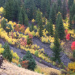 Cache National Forest Fall Scenery — Stock Photo #8028076