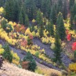 Cache National Forest Fall Scenery — Stock Photo