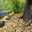 Cache River Utah in the fall — Stock Photo