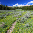 Bighorn National Forest Path — Stok Fotoğraf #8029936