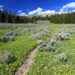Bighorn National Forest Path — 图库照片 #8029936