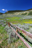 Bighorn National Forest Landscape — Stock Photo