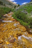 Bighorn National Forest Stream — Stock Photo