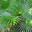 Tropical Vegetation (USVI) — Stock Photo