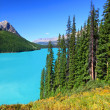 Stock Photo: Peyto Lake in Canada